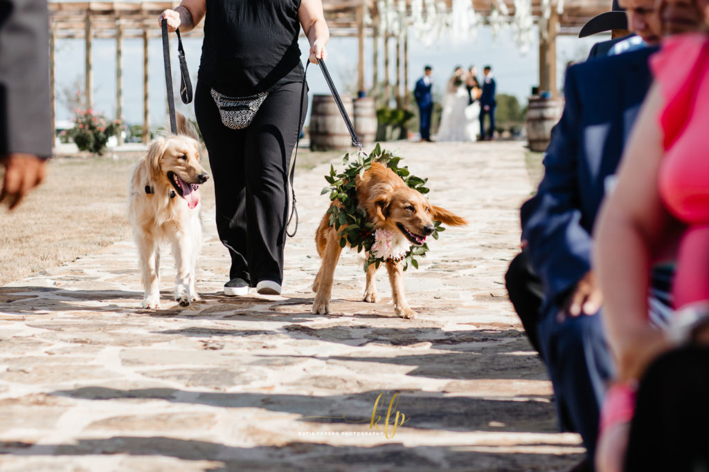 labradors in wedding ceremony