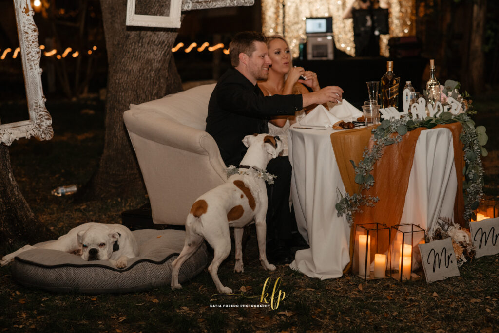 cheers with your dogs during your wedding